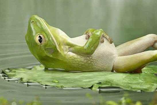 relaxing-frog_rechthoekig